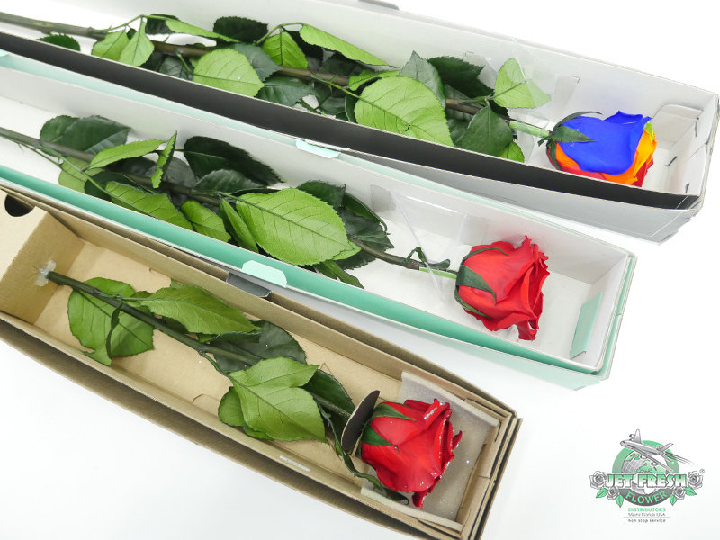Preserved Roses at Jet Fresh Flowers