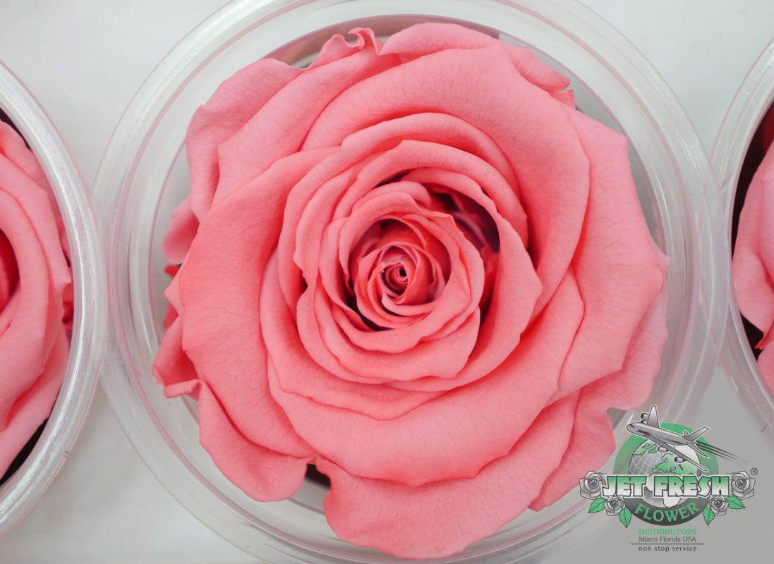 Featured Preserved Roses