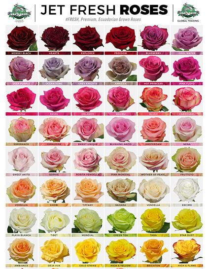 Jet fresh roses