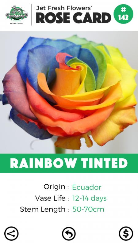 Rainbow Tinted rose card