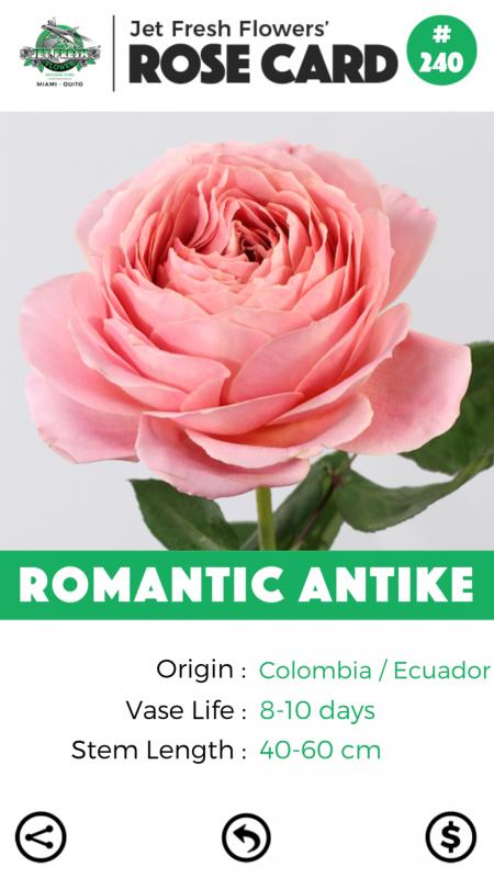 Romantic Antike rose card