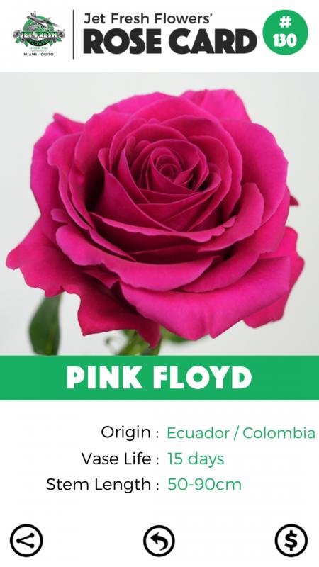 Pink Floyd rose card