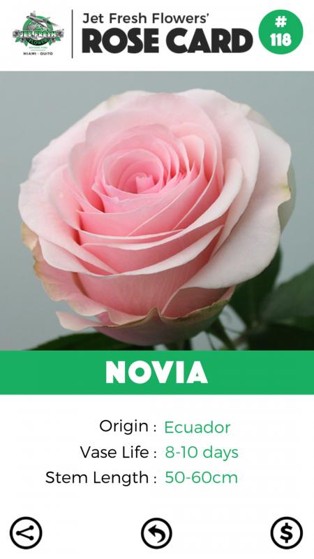 Novia rose card