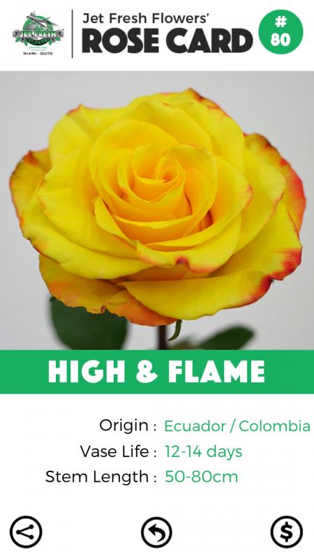 High & Flame rose card