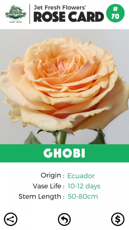Ghobi rose card