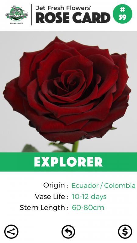 Explorer rose card